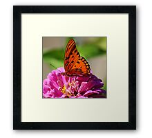 Butterfly at work Framed Print