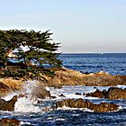 """Cypress By The Sea"" by Gail Jones"