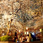 Sakura Viewing at Night (Yozakura) by kianhwee