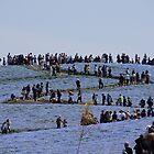 Nemophila Sea by kianhwee