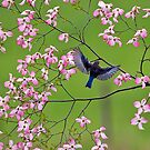 Bluebirds and Blossoms by Randy & Kay Branham