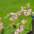 Bluebirds and Red Dogwoods by Randy & Kay Branham