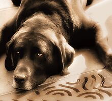 Lazy Day Labrador by Doreen Erhardt