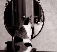Looking from the mirror by Laura Melis