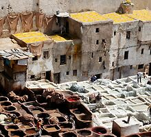 Tannery, Fes Morocco by Debbie Pinard