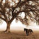 The Old Oak and The Steed  by Doreen Erhardt