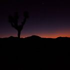 Night crushes Joshua Tree Park Skyline by Chris Kiez
