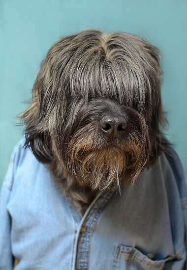 Shaggy by Johanne Brunet