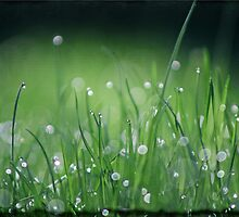 Morning Dew by Crista Cowan