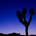 Joshua Tree 3 by Chris Kiez