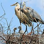 A happy heron family! by jozi1
