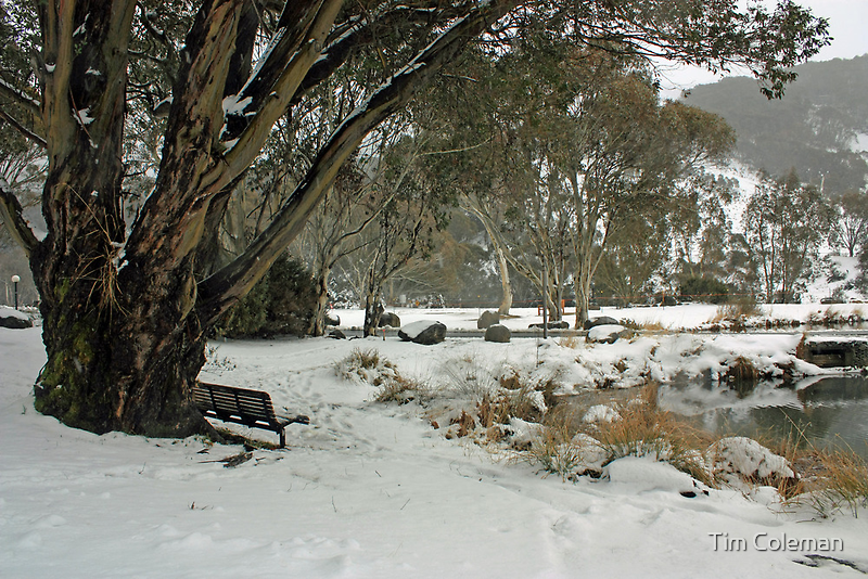 A seat in the snow by Tim Coleman