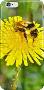 Bumble bee and Dandelion, iphone case by Carolyn Clark