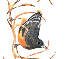 Colored Pencil Oriole with Ribbons by ShinyDesigns