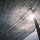 Capture The Sun - Lomo by Yao Liang Chua