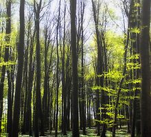 Ruegen-Forest by Jo-PinX