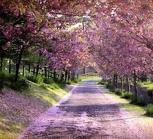Take a walk through the blossom by Cat Perkinton