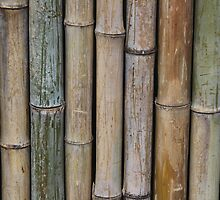 Bamboo Fence by TilenHrovatic