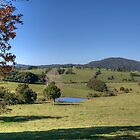Dorrigo Plateau Beauty by Adrian Paul