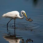 Great White Egret Hunter by Joe Jennelle