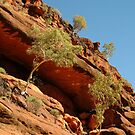 Joe Mortelliti Gallery - Palm Valley, MacDonnell Ranges, Northern Territory, Australia. by thisisaustralia