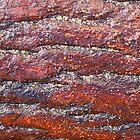 Pine bark wet by orsinico