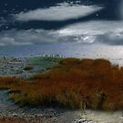 Salt Marsh at the Edge of the Sea by RC deWinter
