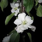Apple blossom at night (2) by Eleanor11