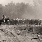 Mustering Brahman Cattle by Mark Ingram Photography