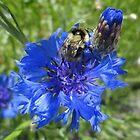 Bumblebee by Adrienne D. Wilson