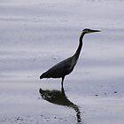 Heron Reflection by Tori Snow