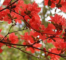 Red Azalea by Linda  Makiej