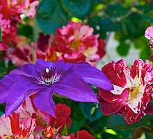 Clematis and Roses by John Butler