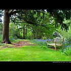 Planting Fields Arboretum State Historic Park Bench - Upper Brookville, New York by © Sophie Smith