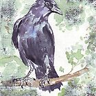 Crow wears a band of Silver by Maree Clarkson