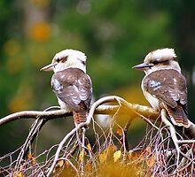 Kookaburras by Pinni Flescher