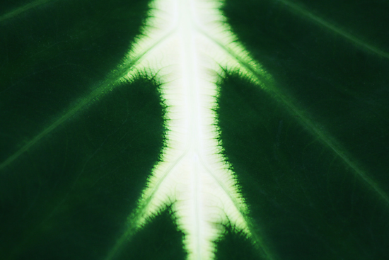 The Heart of a Luminous Leaf by Marilyn Harris