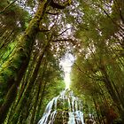 Falls in the forest by Kevin McGennan