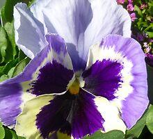Pansy Purple by WildestArt