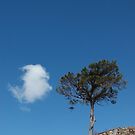 Lone Pine with Lone Cloud by cuilcreations