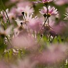 Pink daisy's by Etwin
