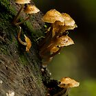 Fungi on a log by srhayward