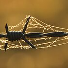 Wire and Web by Colin Binks