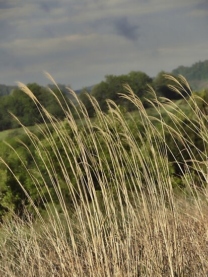 Tall Grasses by vigor