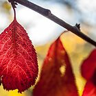 Autumn Red by Candice84
