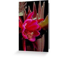 Let The Midnight Special Shine A Light On Me Greeting Card