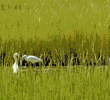 Egrets in the Marsh by Paula Tohline  Calhoun