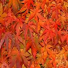Leaves by RusticShiraz