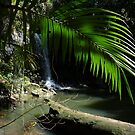 The beauty of the rainforest by PhotosByG by PhotoCo-Op
