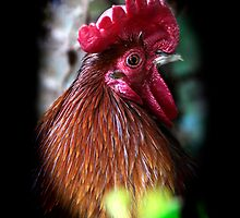 Rooster by RusticShiraz